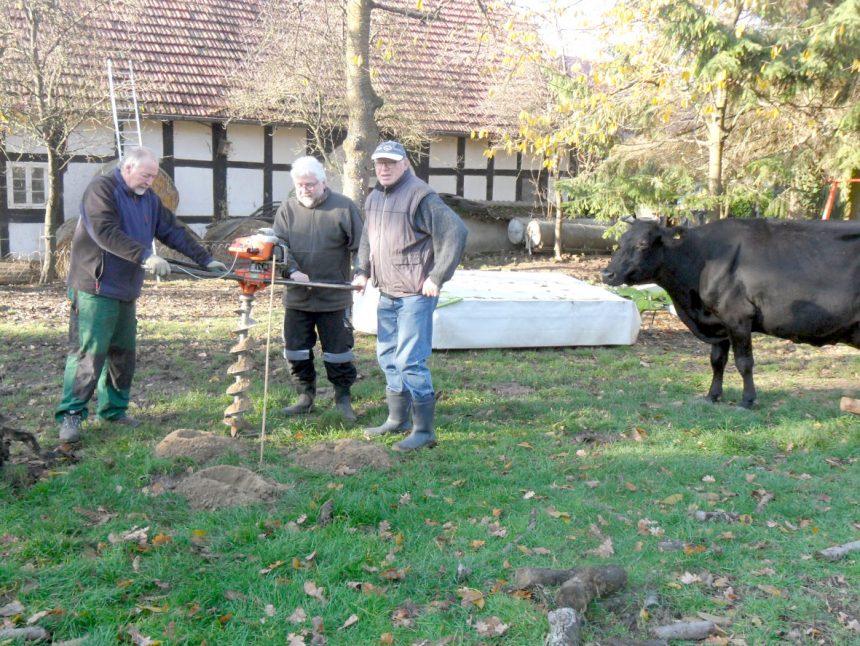 Obstbaumpflanzung auf Rinderweide