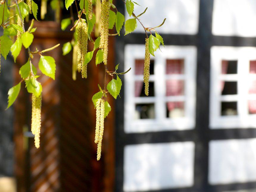 Heimathof Baum Blüten