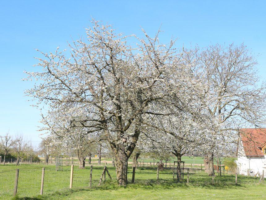 Heimathof Baum