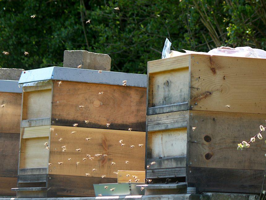 Bienen fliegen aus