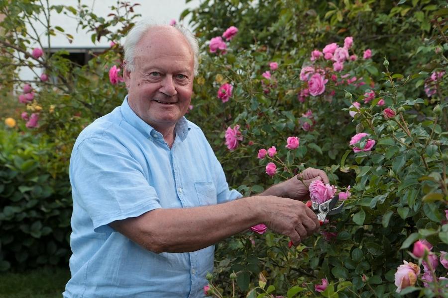 Der stellvertretende Bürgermeister Manfred Burkamp scheidet nach 41 Jahren aus dem Gemeinderat aus. In seiner freien Zeit widmet er sich seinen Rosen in seinem Garten. Foto: Thomas Dohna