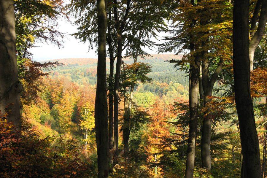 Dennis Wolter Buchenwald Herbstfärbung 1