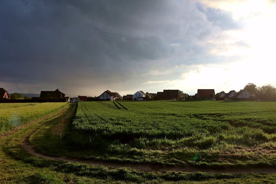 Diese Getreidefelder gehören zur Fläche der Brunsheide, für die in einem Städtebaulichen Wettbewerb Ideen gefunden werden sollen. Foto: Thomas Dohna